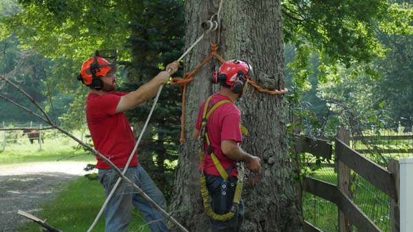 black diamond tree care vermont