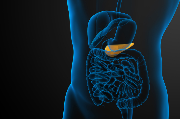 3d render medical illustration of the gallblader and pancrease - side view