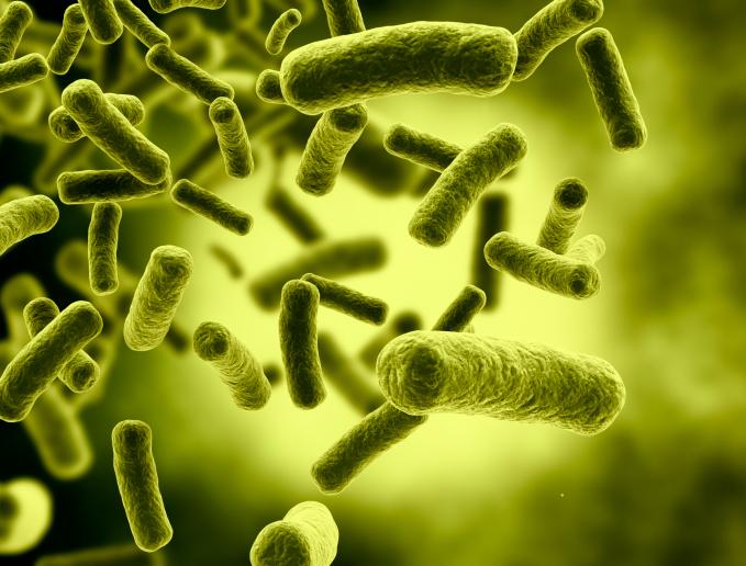 green bacteria cells