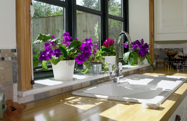 A kitchen window with purple flowering plants