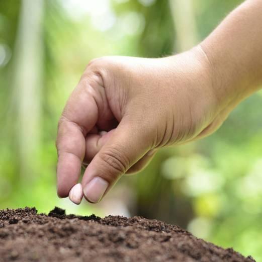 Male hand is seeding peanut