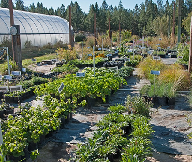 Unlike Nurseries That Use Genetically Altered Cultivars Of Native Plants We Propagate Wild Native Seeds We Collect And Take Cuttings From Local Sources