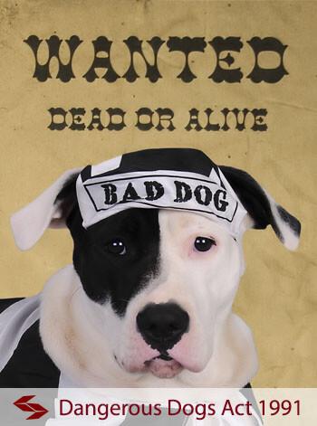 dangerous dogs act 1991