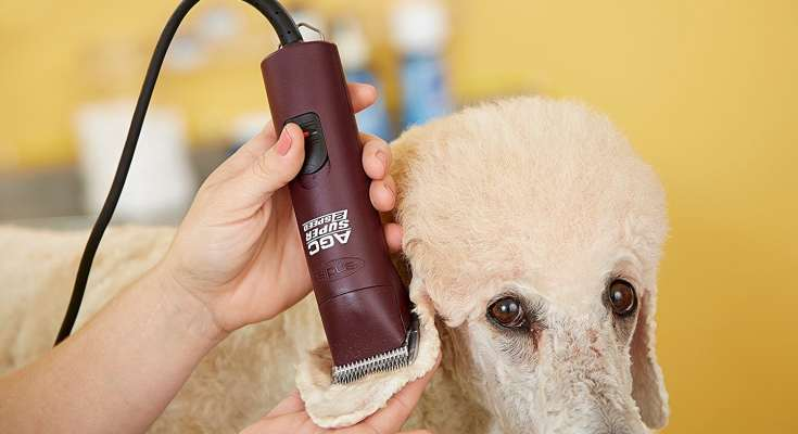 Dog Clippers Black Friday Deals 2019