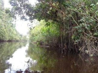 amerindian-river