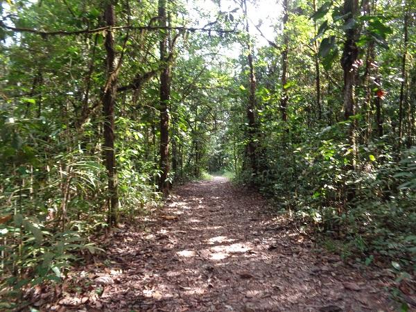 kaieteur-trails