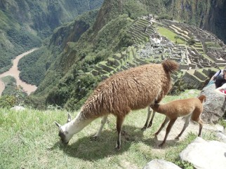 what-to-do-in-machu-picchu