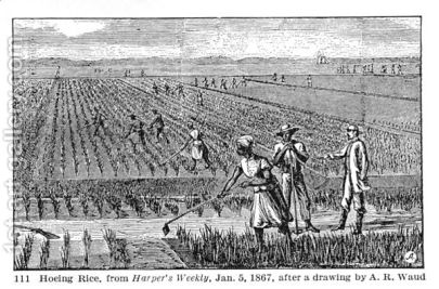 Hoeing-Rice,-Illustration-From-Harpers-Weekly,-1867,-From-The-Pageant-Of-America,-Vol.3,-By-Ralph-Henry-Gabriel,-1926