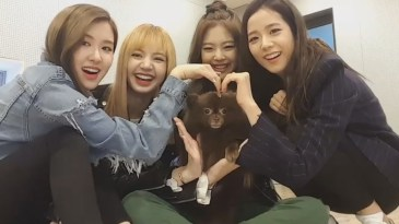 Blackpink Jisoo Jennie Rose Lisa and kuma vlive