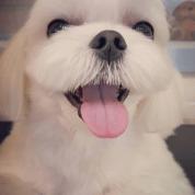 Ban Dalgom Blackpink Jisoo Dog