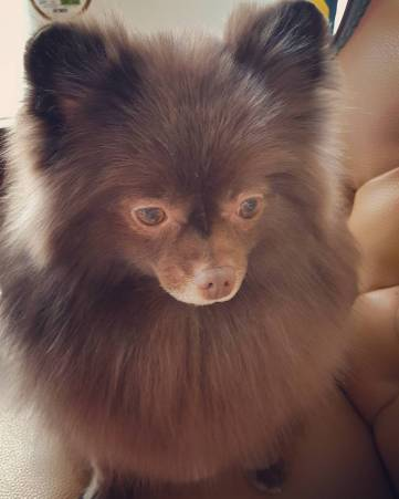 Kuma Blackpink Jennie dog