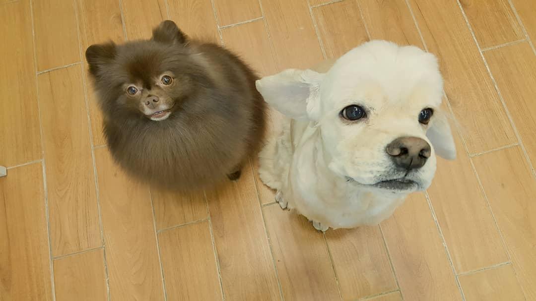 Kuma Kai Blackpink Jennie dogs 2018