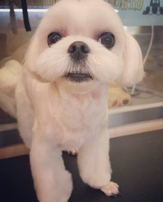 Blackpink Jisoo Dog Dalgom 2