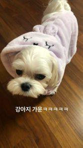 BLACKPINK Jisoo Instagram Story 9 August 2018 sooyaaa dalgom