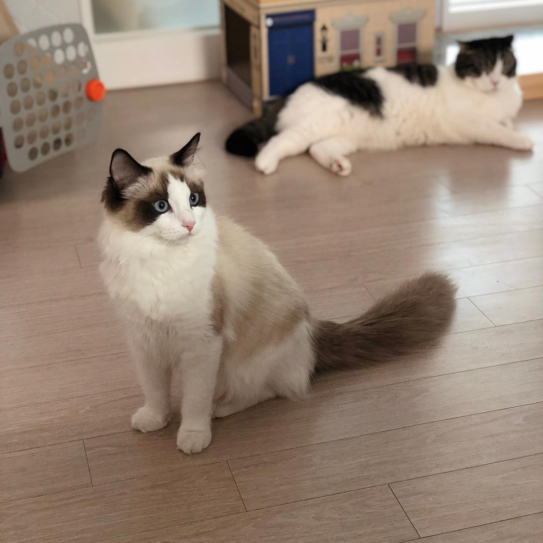 PETPINK UPDATE: BLACKPINK Lisa Cats Leo and Luca, January 12, 2019