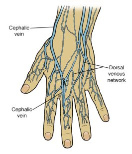 images of veins in body part 1 | black poppy's junk mail, Cephalic Vein