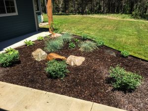 mulch and newly planted shrubs