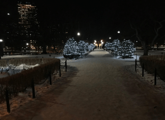 snow walking the Boston Public Garden