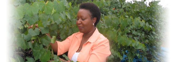 Black_Owned_Vineyard_Tilford_Winery_2-595x217 Black Owned Wineries in the South You Must Visit