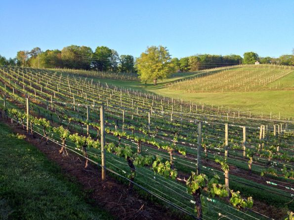 Three-Sisters-Vineyards-afternoonsun-595x446 Wineries in Dahlonega, GA That You Must Try