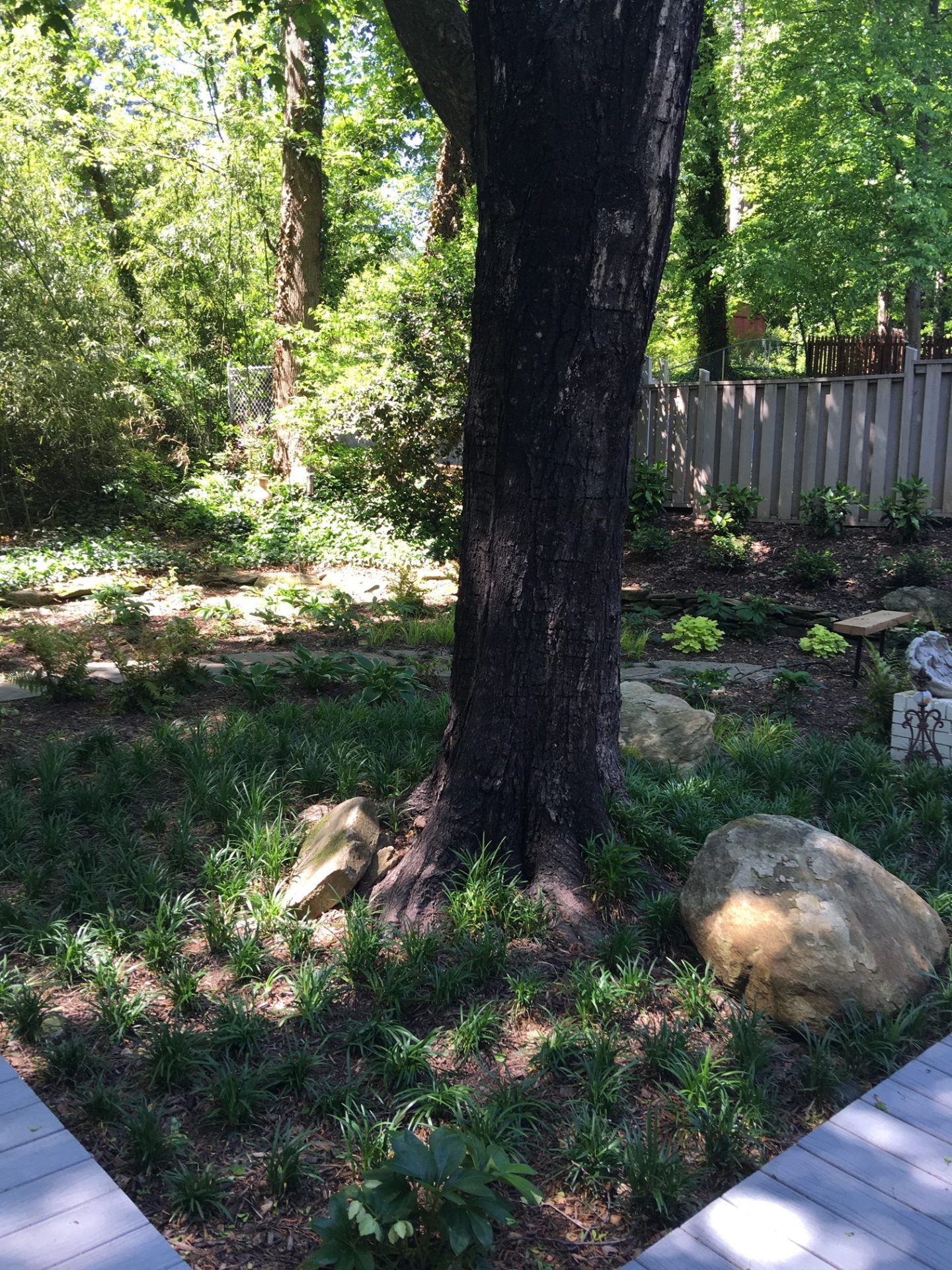IMG_1425-1440x1920 African American Landscape Architect Gives 3 Tips to Working With An Expert to Upgrade Your Yard