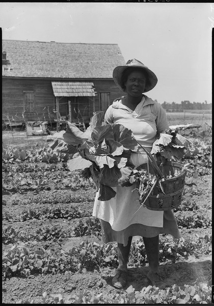 No_original_caption._African-American_woman_picking_vegetables_from_a_garden._-_NARA_-_513401.tif America's Forests in South Carolina: Sustaining African American Land