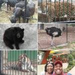 Animals at the Havana Zoo
