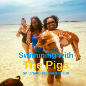 Swimming with the Pigs!
