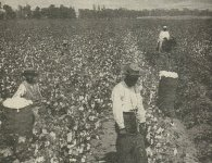 cotton slavery photo