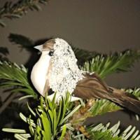 My imaginary pet bird