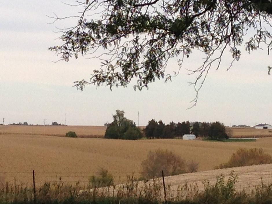 farm - 1