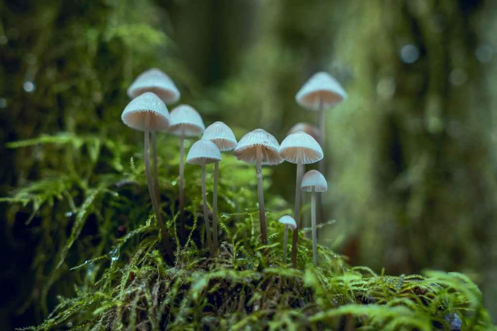 white fungi