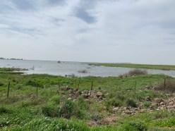 Auf den Golanhöhen sammelt sich zu dieser Jahreszeit oft Schmelzwasser und Regenwasser zu Seen an.
