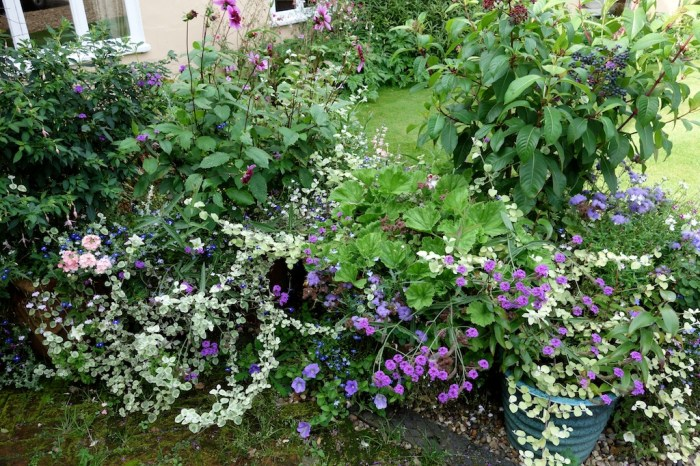 purple flowers (1)