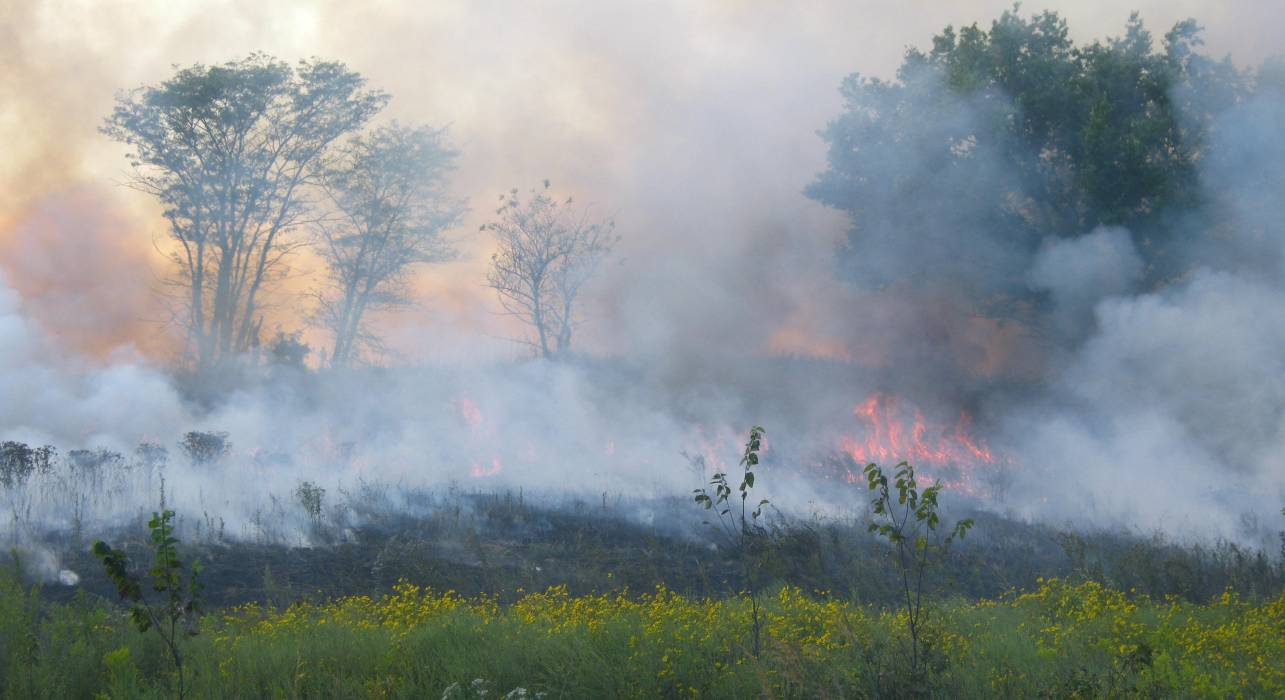 Blackwell Creek Forestry Prescribed Burning