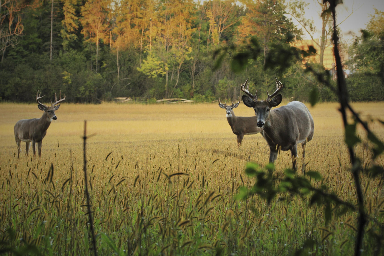 Blackwell Creek Forestry Wildlife Habitat Management