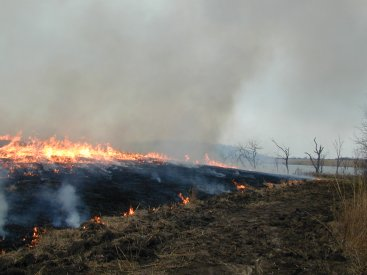 Fire/Prescribed Burning