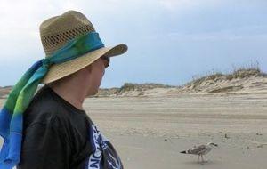 Tern on Corolla Beach