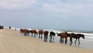 Wild horses following us down the beach