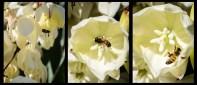b07. Judy Sara_Collecting Pollen_Set