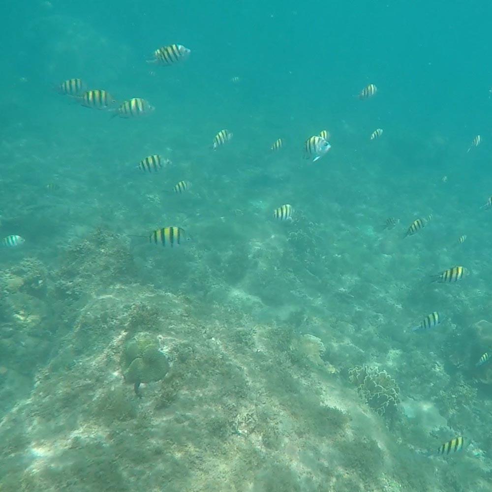 So viele Fischschwärme habe ich schon lange nicht mehr auf einmal gesehen.