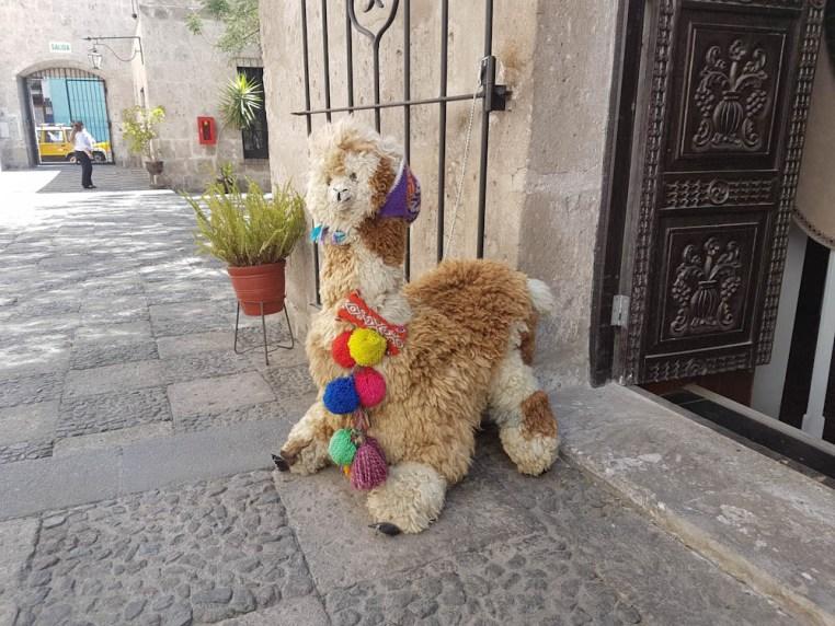 Lama / Alpaka in Arequipa