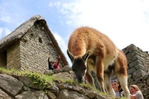 Peru-Heiliges-Tal-Machu-Picchu_6