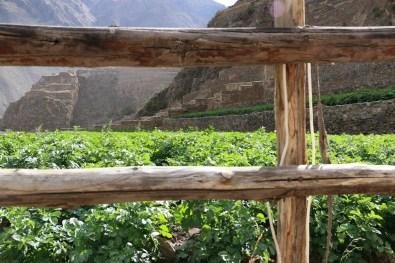 Peru-Heiliges-Tal-Ollantaytambo_10