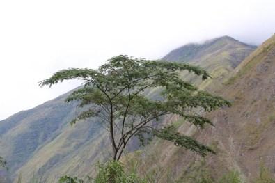Peru-Heiliges-Tal-Santa-Teresa-Hotsprings_4