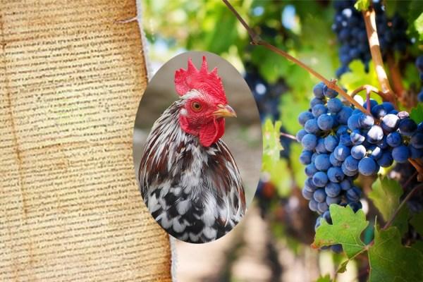 O kokošima, svinjama i divljači: drevne kazne za prekršaje koji više ne postoje danas zvuče bizarno no svojedobno su bile potpuno logične