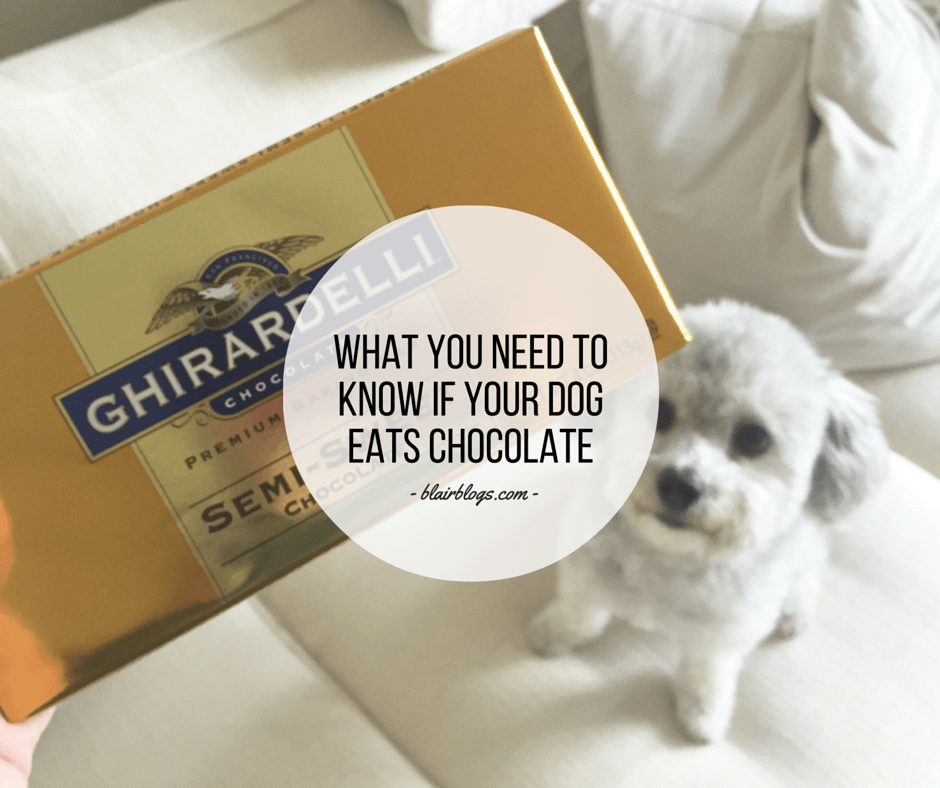 What You Need To Know If Your Dog Eats Chocolate