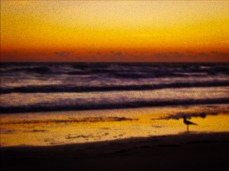 New Photo Art Titled: Seagull Standing at Ocean Edge Fishing at Dawn. Digital painting from photo of silhouette of seagull walking at waters edge dawn sunrise over the Atlantic Ocean in Daytona Beach Shores