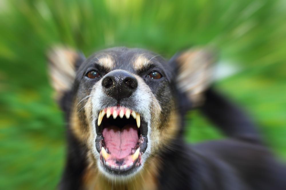 Un chien énervé
