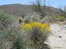 Anza-Borrego, Mine Wash